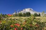 Thumbnail Mount Hood, volcano, Oregon, USA
