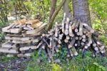 Thumbnail Piled up fire wood as a nesting facility for insects in the garden, insect hotel