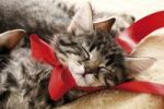 Thumbnail Kitten sleeping, with a red ribbon, 6 weeks old