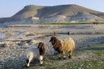 Thumbnail Mountain Jebel Arruda on the Asad reservoir of the Euphrates, Syria, Asia