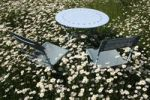 Thumbnail Garden table and 2 chairs on a lawn with flowering oxeye daisies (Leucanthemum vulgare)