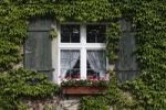 Thumbnail Windows with shutters, jardinière and tendril plant