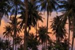 Thumbnail Palm trees against red evening sky, atmospheric sunset, Phu Quoc, Vietnam, Asia