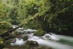 Thumbnail Mountainstream in Cloudforest, La Paz Waterfall Gardens, Central Valley, Costa Rica, Central America