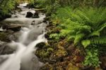 Thumbnail Small river, ferns in the foreground, Geiranger, Norway, Scandinavia, Europe