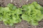 Thumbnail Green salad