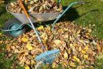 Thumbnail Pile of leaves, autumn