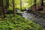 Thumbnail Primeval forest in the Vessertal valley, Biosphaerenreservat Vessertal-Thueringer Wald, biosphere reserve Vesser valley-Thuringian Forest, Thuringia, Germany, Europe