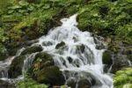 Thumbnail Forest brook near Gosau, Salzkammergut area, Upper Austria, Austria, Europe