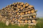 Thumbnail Wood pile