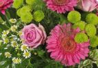 Thumbnail Bouquet with Gerberas (Gerbera), Roses (Rosa), and Oxeye Daisies (Leucanthemum vulgare)