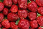 Thumbnail Freshly picked organic strawberries