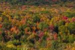Thumbnail Aerial view on colorful fall forest in Ontario, Canada