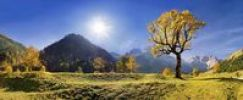 Thumbnail Autumnal mountain panorama, glowing maple tree, low sun, Grosser Ahornboden, Karwendel, Austria, Europe