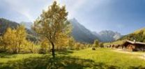 Thumbnail Glowing autumnal maple tree, mountain cabin, snow-covered mountains, Grosser Ahornboden, Karwendel, Austria, Europe