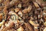 Thumbnail crabs are gepult