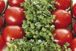 Thumbnail Tomatoes and cress