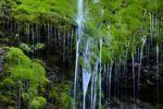 Thumbnail Small waterfall on mossy rocks, Gunzesried, Immenstadt, Upper Allgaeu, Bavaria, Germany, Europe