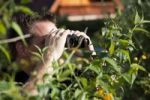 Thumbnail Curious neighbor with binoculars hiding behind the hedge