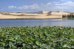 Thumbnail White Lake with water lilies, sand dune behind the White Sand Dunes, known as the Vietnamese Sahara, Bau Ba, Bao Trang, White Lake, Vietnam, Asia