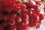 Thumbnail Frozen red currants