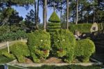 Thumbnail Hedges cut into the shape of two dragons, Tuyen Lam pagoda, Central Highlands, Dalat, Asia, Vietnam