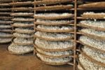 Thumbnail Baskets full of silkworm cocoons in a silk factory, v