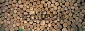 Thumbnail Stacked logs