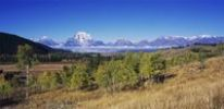 Thumbnail Teton Range and aspen trees in fall color, Grand Teton National Park, Wyoming, USA