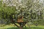 Thumbnail tree house in a flowering apple tree, area of Wachau, Lower Austria, Austria