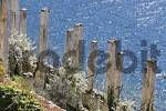 Thumbnail pillars of the abondened lemon greenhouse also called a Limonaie, Limone sul Garda, Lake Garda, Italy