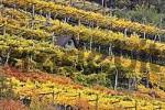 Thumbnail wineyard in autumn colors, Schnals valley, South Tyrol, Italy