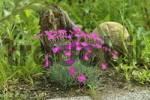 Thumbnail flowers in the garden