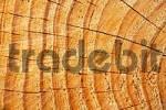 Thumbnail wood in detail