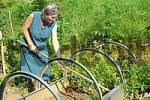 Thumbnail senior woman does gardening