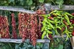 Thumbnail Chili peppers drying in Calabria, South of Italy, Italy, Europe