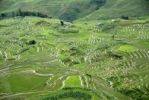 Thumbnail Green rice fields on the hillside, terraced rice fields, Yuanyang, in Xinji, Yunnan Province, People's Republic of China, Asia