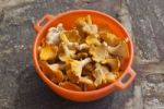 Thumbnail Collected chanterelles or chanterelle mushrooms (Cantharellus cibarius) in plastic bowl