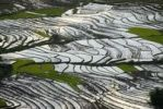 Thumbnail Rice, rice cultivation, rice terraces on a slope filled with water at Ou Tai, Gnot Ou district, Yot Ou, Phongsali, Phongsali Province, Laos, Southeast Asia, Asia