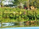 Thumbnail farm workers Campesinos at the Rio Paraguay, Pantanal