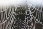 Thumbnail Spiderweb with dewdrops