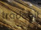 Thumbnail Bristlecone Pine, Yosemite NP, California, USA