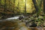 Thumbnail Bode river in the Elendstal valley, Harz, Saxony-Anhalt, Germany, Europe