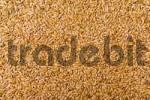 Thumbnail barley