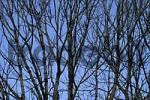 Thumbnail naked tree