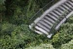 Thumbnail Staircase leading into green overgrowth