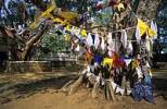 Thumbnail bodhi tree in a buddist temple at Anuradhapura