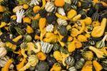 Thumbnail Decorative gourds