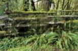 Thumbnail wooden fence overgrown with moss in Olympic National Park