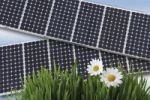 Thumbnail Solar cells behind grass with flowers, a symbolic image for renewable energy